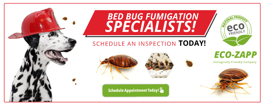 bed bug fumigation specialists